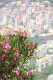 用花装饰的city2 免版税库存照片