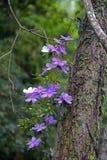 用花装饰荣耀的树 库存照片