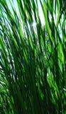 用茅草盖被日光照射了 免版税库存图片