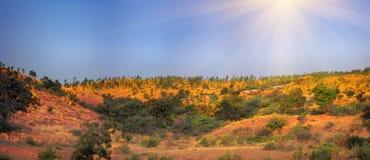 用草和金合欢灌木报道的德干高原 库存图片