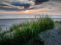 用草盖的沙丘 免版税库存照片