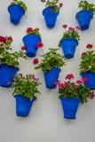 用蓝色花盆装饰的白色墙壁在老镇Co 免版税库存图片