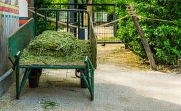 用被剪的草装载的停放的大独轮车,园艺设备 库存图片
