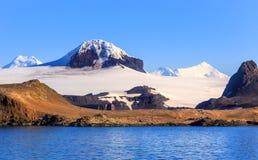 用许多报道的海岸线小gentoo企鹅和雪mo 免版税库存照片