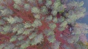 用轻的霜盖的杉木森林,阴沉的秋天风景 股票视频