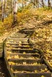 用金子秋叶盖的森林台阶 免版税库存照片