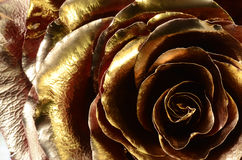 用金黄油漆盖的红色玫瑰 图库摄影