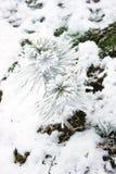 用雪包括的小的杉树 免版税库存照片