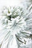 用雪包括的小的杉树 免版税图库摄影