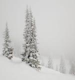 用雪包括的杉树。 免版税图库摄影