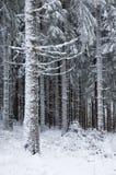 用雪包括的结构树。 免版税库存照片