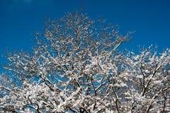 用雪包括的结构树 免版税图库摄影