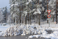 用雪包括的结构树 免版税库存图片