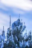 用雪和冰报道的云杉的分支 冰结冰的小滴 免版税库存照片