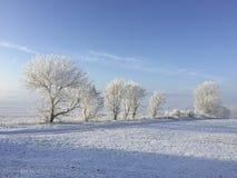 用雪和冰盖的树在冬天环境美化 免版税库存图片