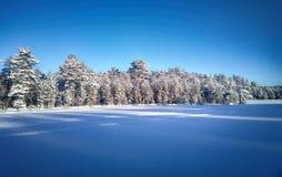用雪和冻湖盖的云杉的树森林 免版税库存照片