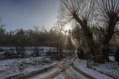 用雪和太阳光芒盖的土路击穿通过树森林 库存图片