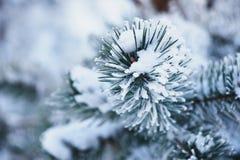用雪和树冰报道的树蓬松分支在一冷的天 免版税库存照片