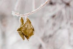 用雪和树冰盖的冬天叶子 免版税库存图片