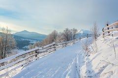 用雪和树盖的冬天路 库存照片