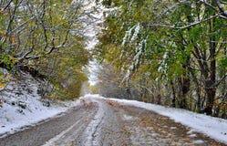 用雪和树盖的路 免版税库存图片