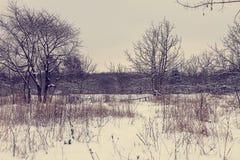 用雪和树盖的领域 图库摄影