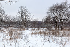 用雪和树盖的领域 免版税库存照片