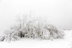 用雪和灌木盖的树 库存照片