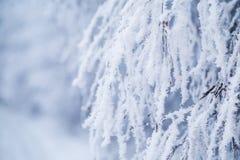 用雪和霜报道的落叶树分支 库存图片