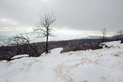 用雪报道的冬天风景 库存图片