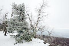 用雪报道的冬天风景 库存照片