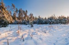 用雪报道的冷杉分支 免版税库存图片