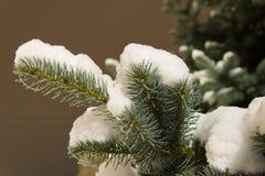 用雪报道的冷杉木分支 夜射击 免版税库存图片