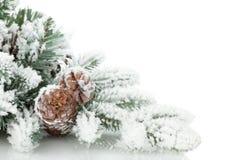 用雪报道的杉树分支 免版税库存照片