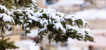 用雪报道的赛普里斯分支在冬时 被弄脏的背景,看法的关闭与细节 免版税库存图片