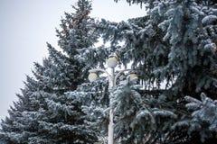 用雪报道的银色火反对天空 免版税库存照片