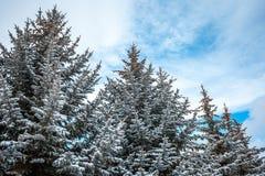 用雪报道的银色火反对天空 免版税图库摄影