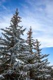 用雪报道的银色火反对天空 库存图片