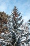 用雪报道的银色火反对天空 免版税库存图片