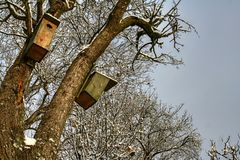 用雪有一点盖的两个木鸟箱子 免版税库存图片