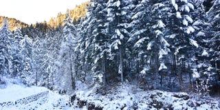 用雪毯子报道的北部的伟大的森林  免版税库存图片