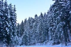 用雪毯子报道的北部的伟大的森林  库存照片