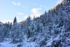用雪毯子报道的北部的伟大的森林  库存图片