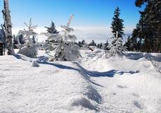 用雪涂的树 免版税库存照片