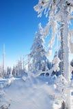 用雪涂的树 免版税库存图片