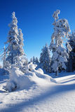 用雪涂的结构树 免版税图库摄影