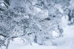 用雪盖帽盖的树早午餐 免版税库存照片