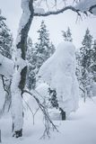 用雪盖帽盖的树早午餐 免版税库存图片