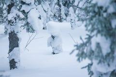 用雪盖帽盖的树早午餐 免版税图库摄影