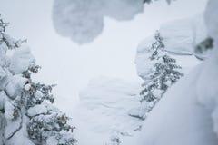 用雪盖帽盖的树早午餐 库存图片